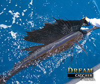 Sailfish Key West
